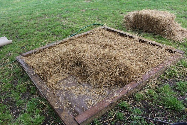 Cardboard and straw mushroom bed